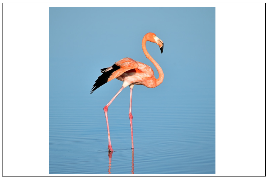 the-dance-of-the-flamingo 2